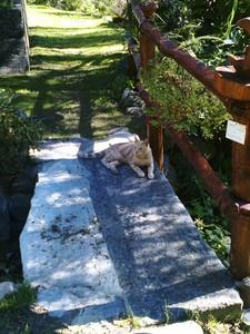 il ponte del micio