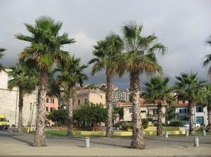 Palme in Piazza