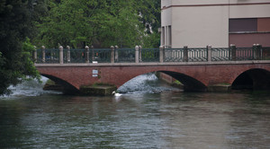 ponte con cigno