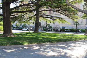 Alberi in Piazza Zanardelli