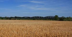tra i campi di grano