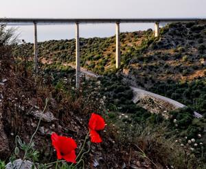 due papaveri per un ponte moderno