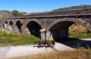 Cavalli a passeggio