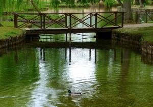 Un' oasi di pace