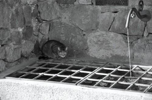 Tires - una presenza inquietante nella fontana...