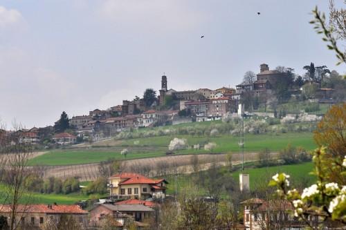 Montiglio Monferrato - Primavera.