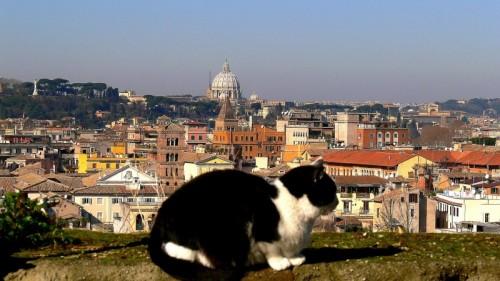 Roma - La gatta