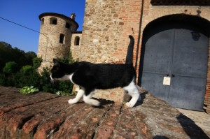 il guardiano del castello