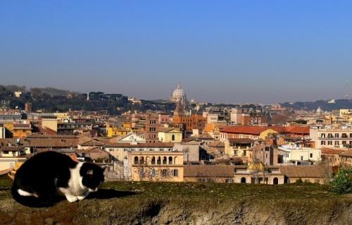 Roma - Pennichella al sole invernale