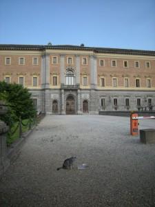 Micio nel cortile del Duomo di Torino
