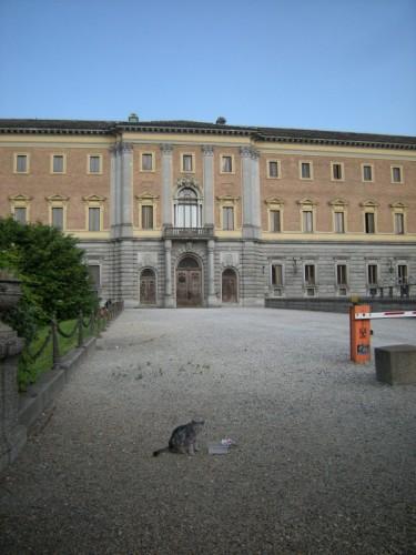 Torino - Micio nel cortile del Duomo di Torino