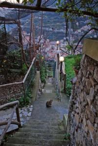 un incontro con un gattino scendendo gli 88 gradini per Minori