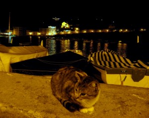 La Baia dei Gatti