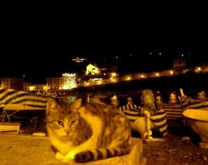 Il cambio di espressione del gatto..significa..basta con le foto!!!