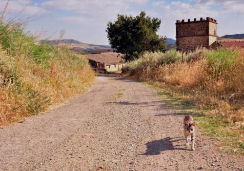 Villarosa - Attenti al gatto!