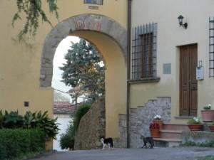 Il portale sul Mondo dei Gatti