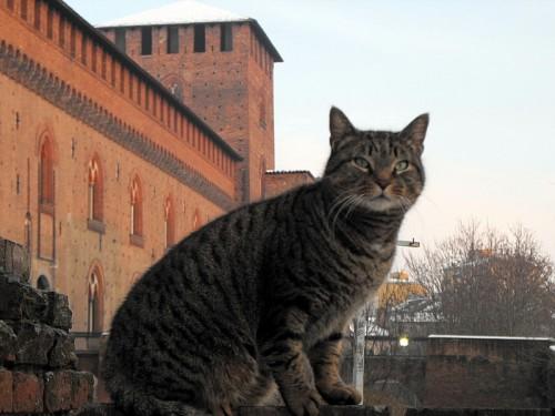 Pavia - Di guardia al Castello