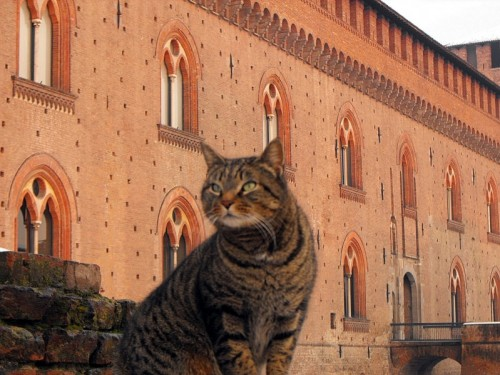 Pavia - Gattone al Castello Visconteo