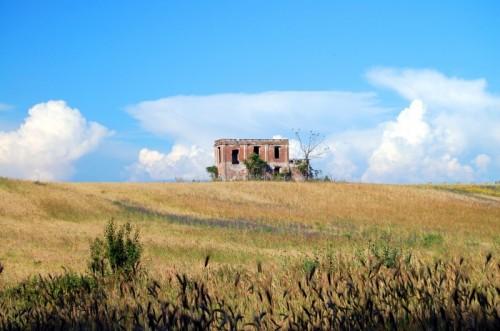 Roma - Sola in un campo di grano