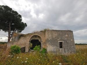 un albero secolare a guardia del casale abbandonato