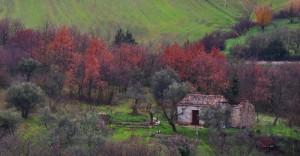 Abitazione rurale semiabbandonata in agro orsarese (di Puglia)