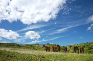 La piana dei cavalli bradi