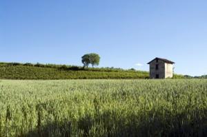 Casolare e campo di grano