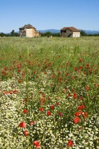 Ruderi e campo di fiori primaverili