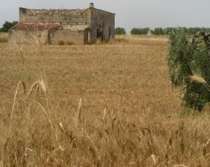 Nel grano di Bernalda