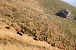 Alpeggio in cima al Monte Cucco