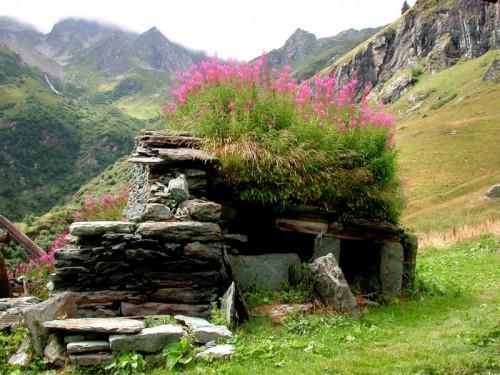 Alagna Valsesia - I fiori al posto del tetto
