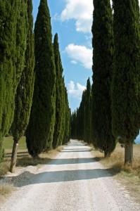 sentiero 26 per Romena
