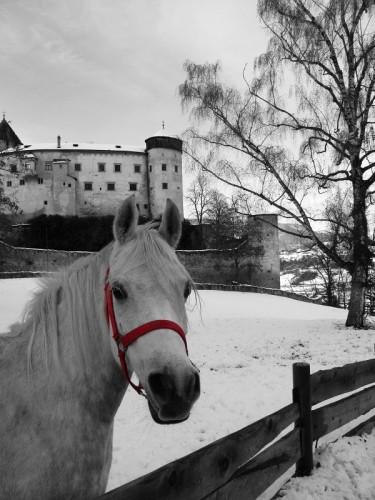 Fiè allo Sciliar - Un Cavallo a Castel Prösels