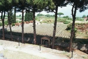 Vigna pompeiana