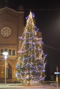 L'albero di San Martino