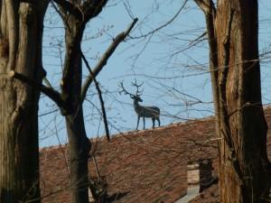 Il cervo sul tetto che scotta