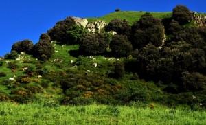 Monte Della Campana