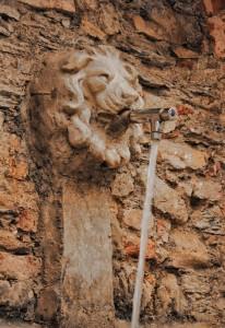 il leone…dissetante…