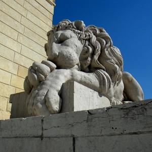 Leone sonnacchioso