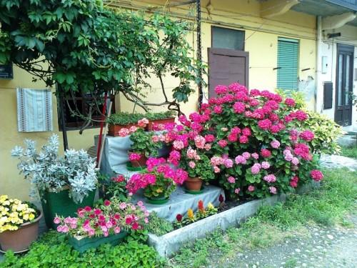 Melzo il piccolo giardino di casa mia for Giardino piccolo