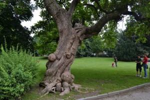 Vecchio albero nei giardini della Guastalla.