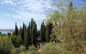 Fra i mediterranei alberi d'olivo e gli svelti cipressi…
