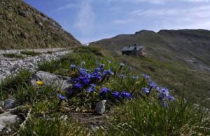 Rifugio Dal Piaz - primavera in arrivo
