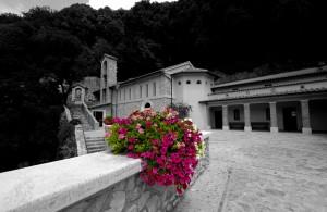 Fiori freschi per San Francesco