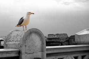 il gabbiano ed il Colosseo