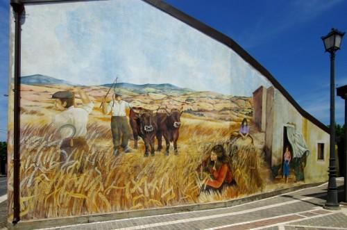 Tinnura - La raccolta del grano