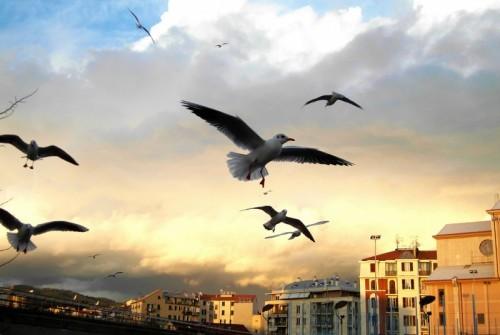 Savona - liberi..come i pensieri che ci uniscono