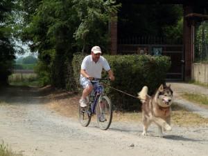 Dog-Bike : Lo scatto