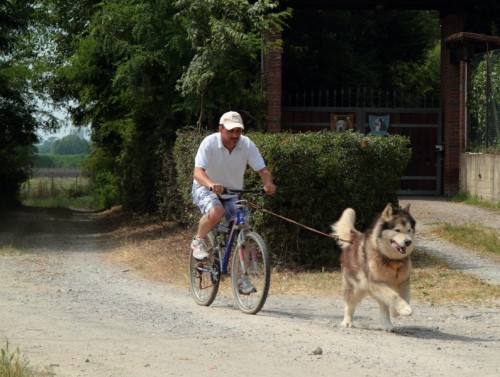 Cappella Cantone - Dog-Bike : Lo scatto
