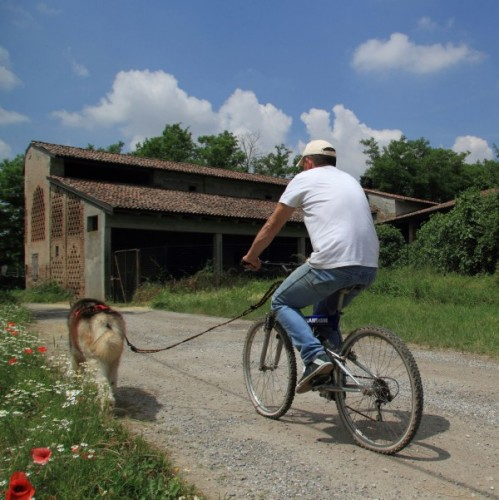 Cappella Cantone - Dog-Bike : Il ritorno